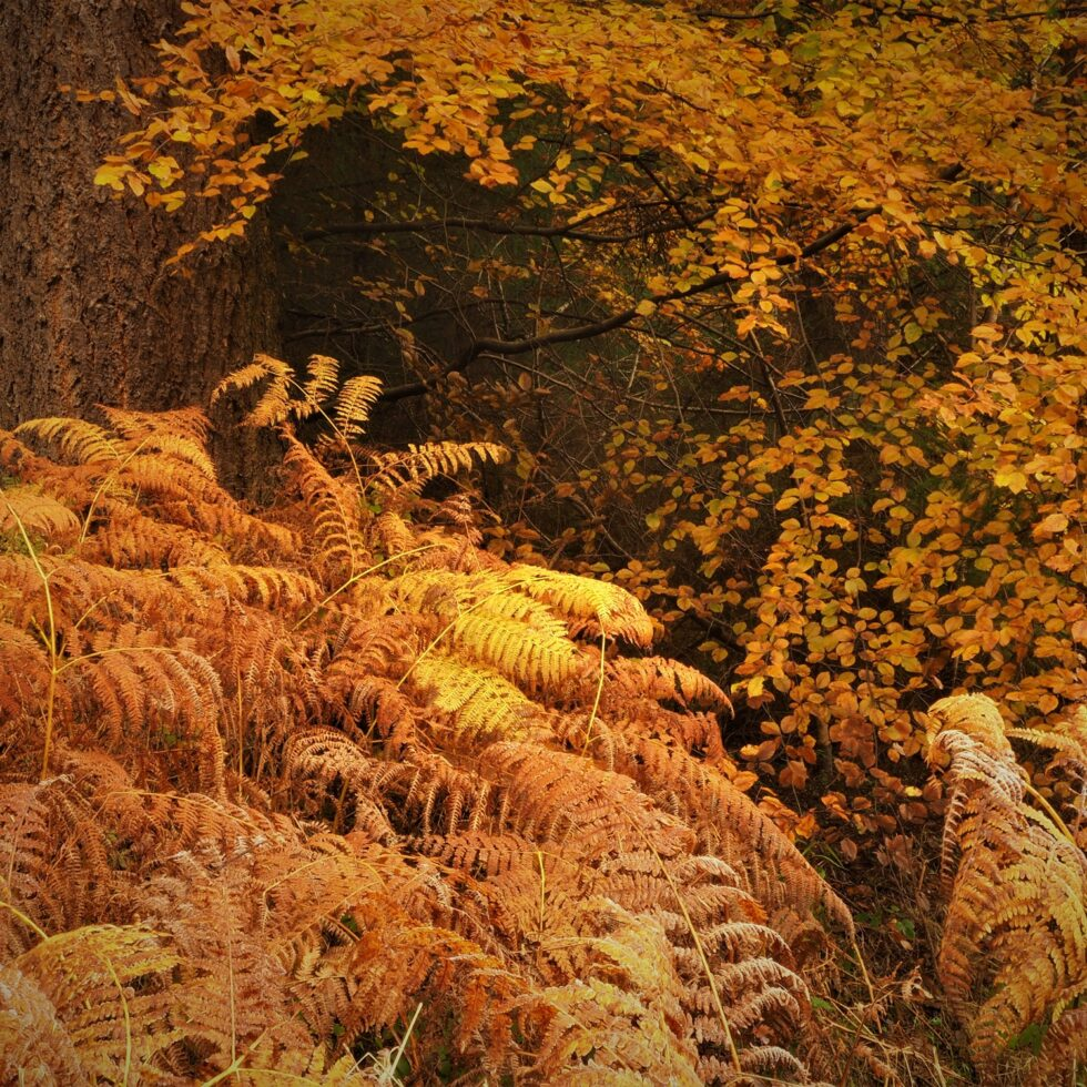 Autumn in Hamsterley Forest