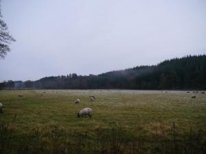 Frosty pastures