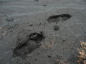 Footprints in the peat