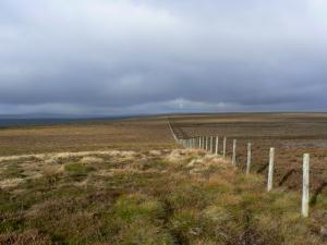 Looking west along the fence from near the top of Dry Rigg