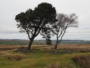 The prominent pair of trees on Loup's Hill