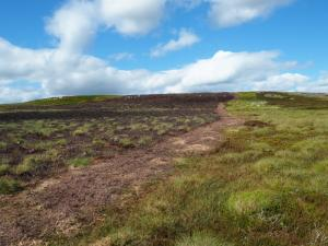 Following a fire break in the heather on to Harnisha Hill