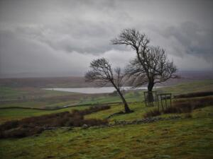The view down to Selset Reservoir from the two trees above the Pennine Way