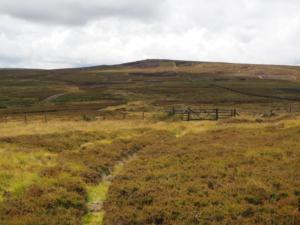 The thin path called Broad Way heading around Harwood Carrs
