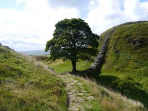 The famous Sycamore Gap