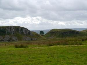 Sycamore Gap from the north