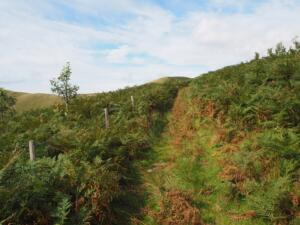 The path climbing up through the bracken