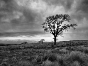 A lone tree outside Hagg Wood