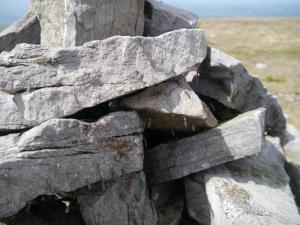 The summit cairn on Melmerby Fell was covered in craneflys