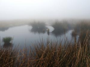 A reedy tarn on Mell Fell
