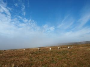 About to re-enter the cloud as we descend Murton Fell