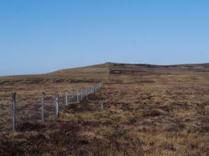 Following the fence on to Whitfield Law
