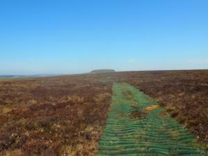 Some more of the 'green mat' track