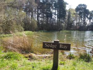 Sedge Bay