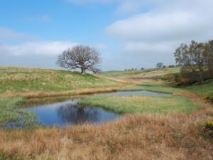 An old fish pond in the Warcop Range